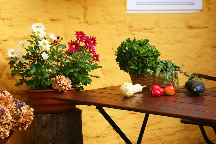 Thanksgiving Day Fall Fall Decor Flower Food Food And Drink Freshness Gourds Growth Healthy Eating Indoors  Mum Flower Nature No People Plant Potted Plant Table Tomato Vegetable Window Box Wood - Material