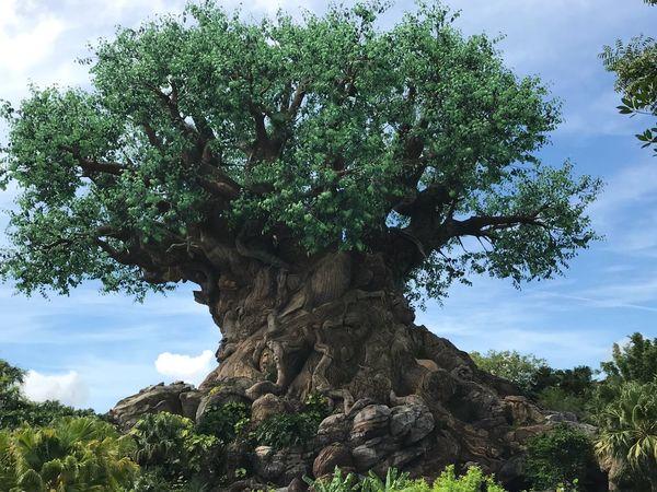 Tree of life Disney Animal Kingdom