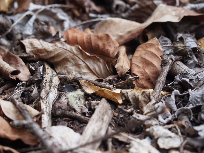 Dried fallen leaves on field