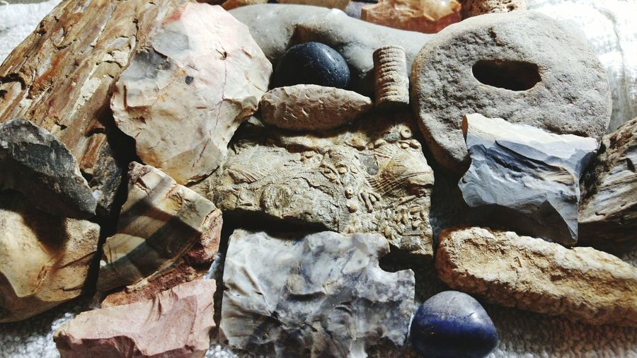 Archealogy Collector Artifacts Fossils Prehistoric Nature Tools Science EyeEmNewHere Break The Mold Art Is Everywhere
