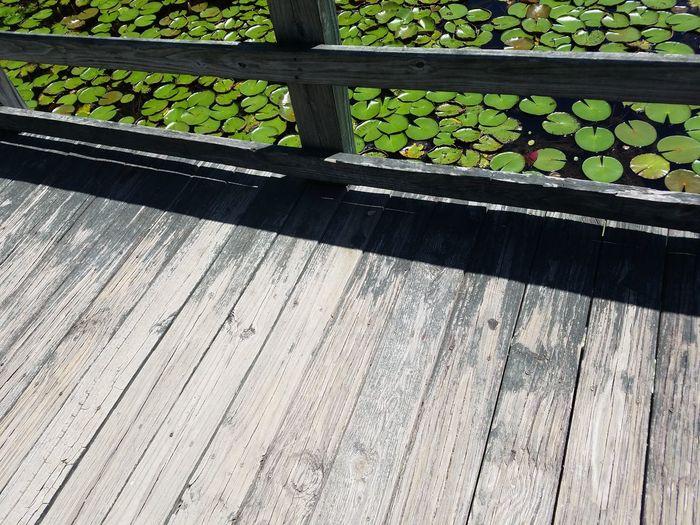 Beautiful Day Summertime 🌞 43 Golden Moments Outdoor Photography Nature HarmonyBridge View Wooden Bridge Lillypads Hidden Gems