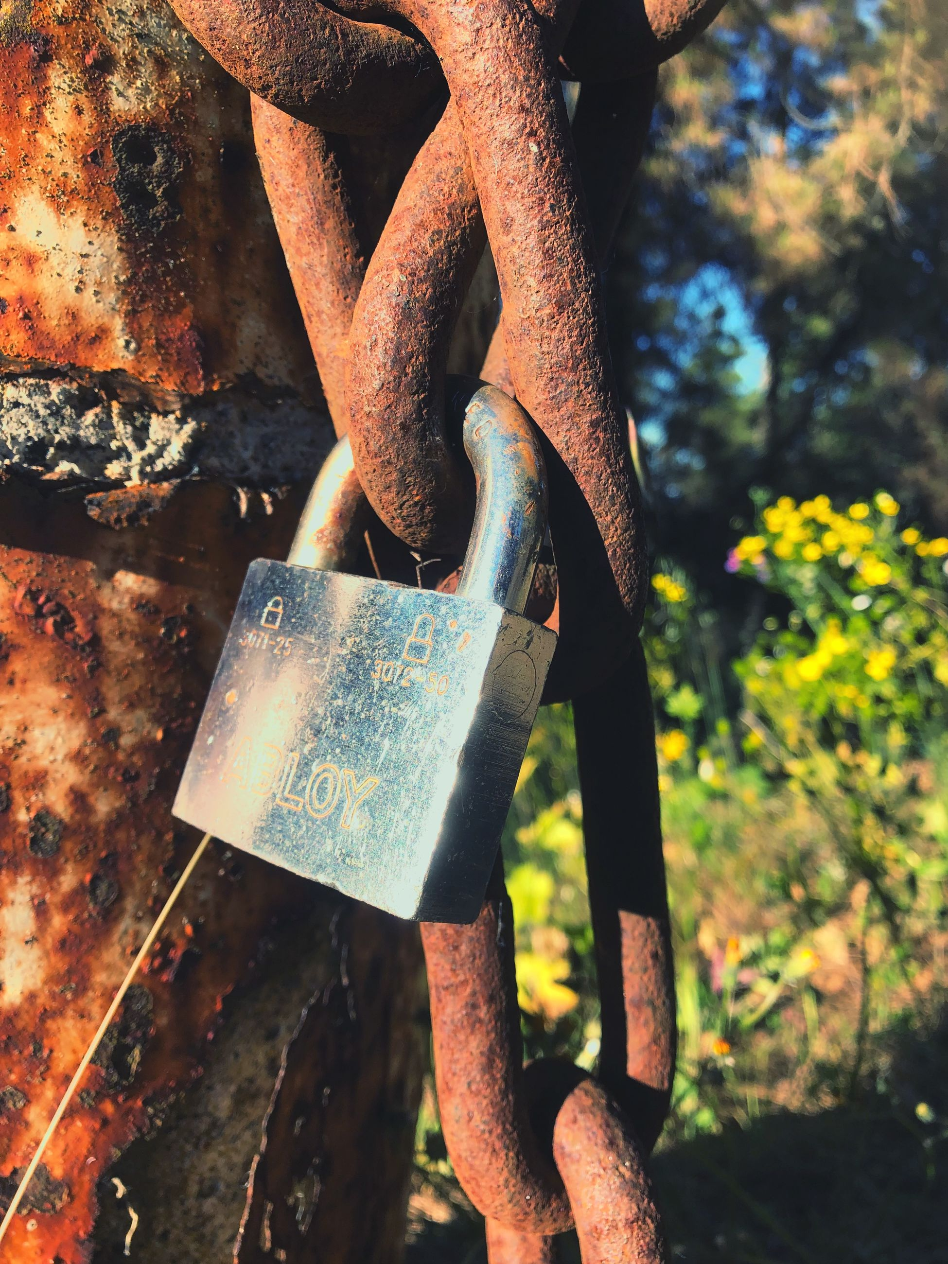 metal, rusty, day, hanging, protection, nature, focus on foreground, text, close-up, security, emotion, outdoors, no people, safety, positive emotion, padlock, lock, love, tree, communication, message