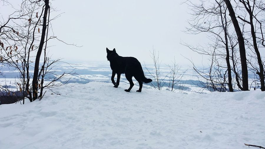 Deepfreeze From My Point Of View Germanshepherddaily Winterhike Natural Beauty Winter Wonderland The Places I've Been TodayGerman Shepherd Endlessness How's The Weather Today?