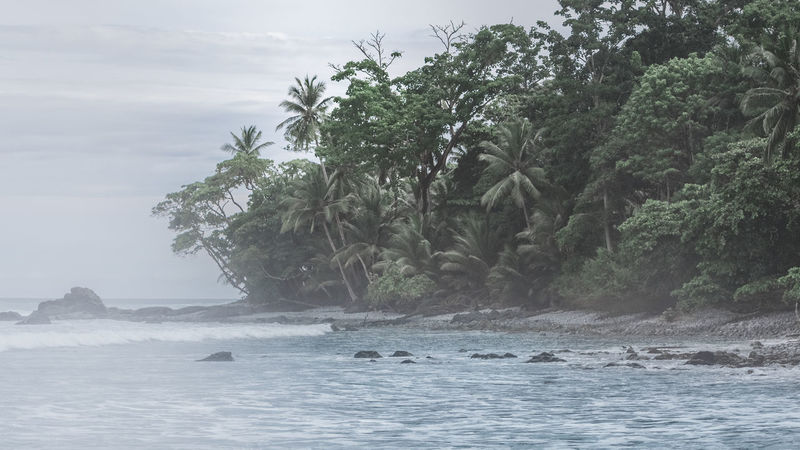 Matapalo beach near the Corcovado National Park of Costa Rica. Seashore Tranquility Trees Beach Beach Jungle Beauty In Nature Jungle Jungle Life Moody No People Sea Sea Life Tranquil Scene Trees At The Bea Water Wildlife Been There.