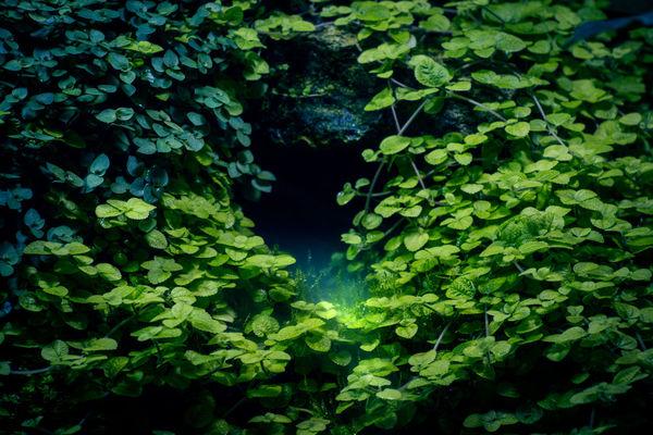 Secret cave Maximum Closeness Botanical Gardens Darkness Darkness And Light Green MsUpMusic Plants Waterfall Аптекарский Огоро ботанический сад МГУДТ