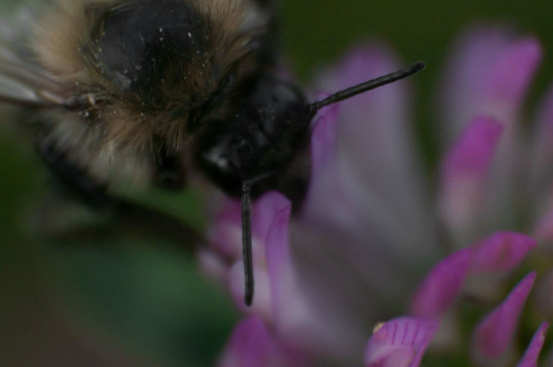 One Animal Purple Animal Themes Domestic Animals Flower Outdoors Pets Close-up No People Day Portrait Mammal Nature Bee Magic Moments Supermakro Makro Freshness Nature Beauty In Nature Super Makro Micro