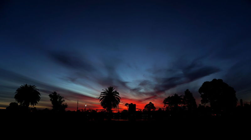 Albert Park Lake Beauty In Nature Cloud - Sky Coconut Palm Tree Dark Environment Landscape Nature Night No People Ominous Outdoors Palm Tree Plant Power In Nature Red Sky Scenics - Nature Silhouette Sky Storm Sunset Tranquil Scene Tranquility Tree