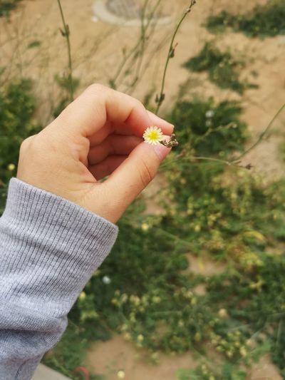 #KAU #KAU #جامعة_الملك_عبدالعزيز #جامعة_عزوز #المملكة #السعودية #ورود #جدة #Jeddah #ksa #tree #trees #flowers Human Hand Men Holding Autumn Close-up