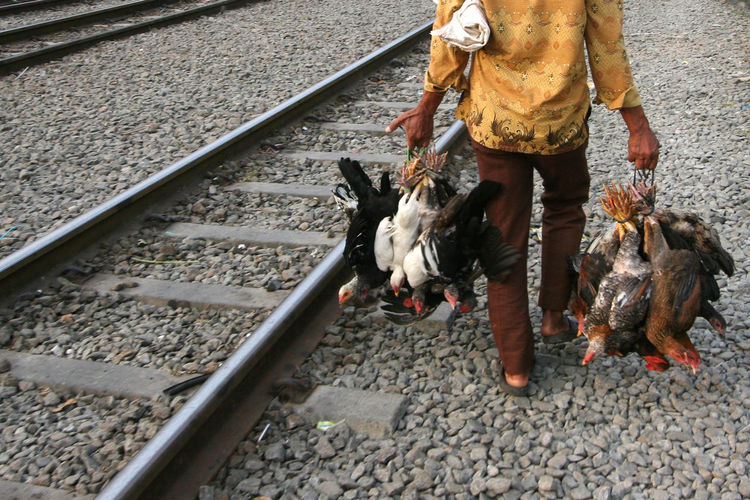 Low Section Of Man With Chickens For Sale By Railroad Tracks