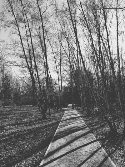 Footpath amidst bare trees