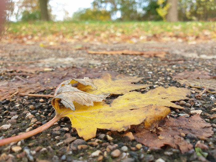 Close-up of dry leaves on field during autumn