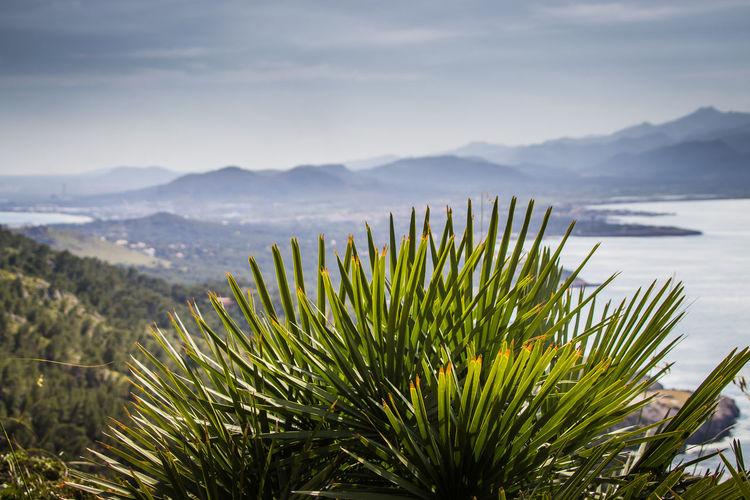 Photo taken in Alcudia, Spain
