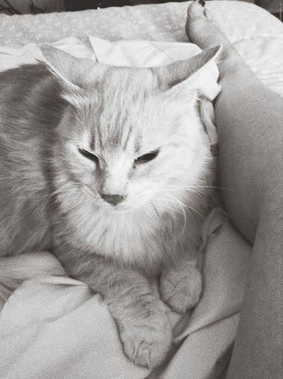 He guards me jealously I Love My Cat ❤ Legs Zen Kitty Yodacat