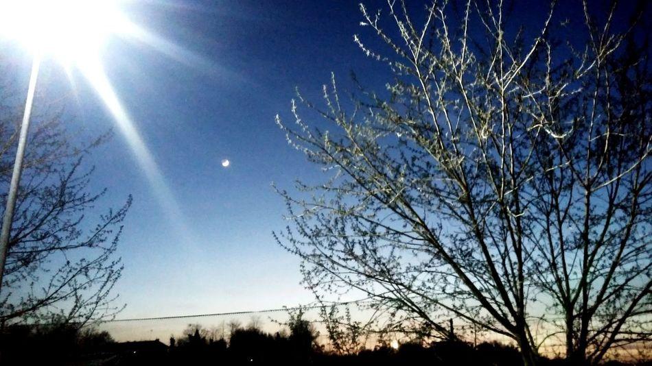Spiring Light And Shadow Astronomy Tree Clear Sky Moon Bare Tree Sunlight Sun Sky