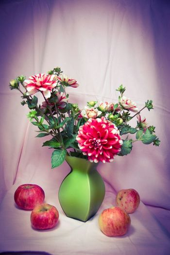 осень краски осени цветы Autumn Aples Flowers