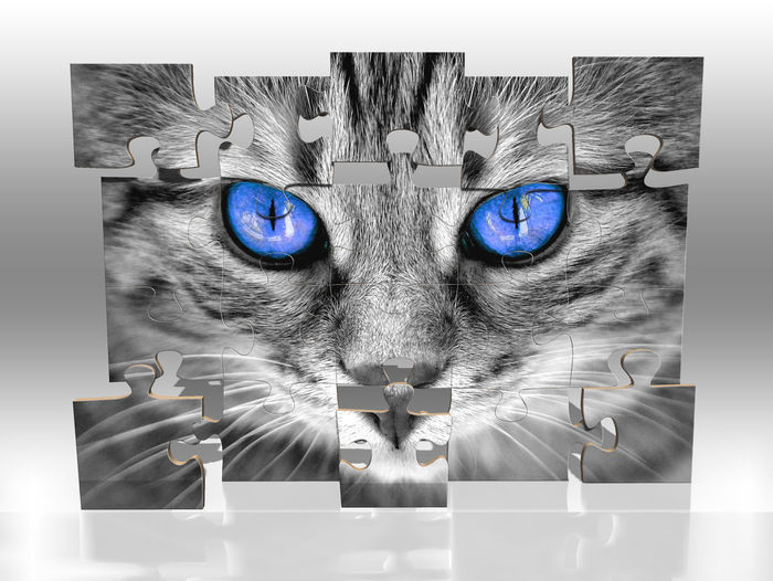 Pets Domestic Domestic Animals Digital Composite Studio Shot Indoors  Animal Mammal Auto Post Production Filter Domestic Cat Cat Portrait Animal Themes Looking At Camera Close-up One Animal Transfer Print Feline No People Front View Animal Head  Whisker Puzzle