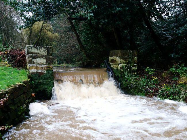 Waterfall Arrowe Park Arrowe Brook Arrowe Country Park Wirral Wirral Peninsula Merseyside Tree Water Motion Waterfall Flowing Water Stream Stream - Flowing Water Splashing Rapid Falling Water Power In Nature
