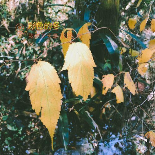 Leaf Autumn Day
