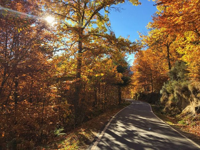 Tree Autumn Nature Road The Way Forward Scenics No People Tranquil Scene Tranquility Change Day Leaf Sunlight Beauty In Nature Transportation Outdoors Forest Growth Landscape Sky Autumn Manteigas Serradaestrela Portugal 🇵🇹 Autumn Mood