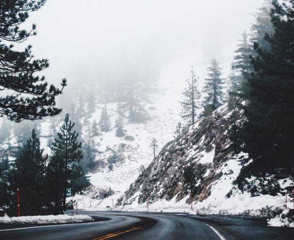 Winter in the LA mountains Los Angeles, California Winter Snow Tree Road Nature The Way Forward Beauty In Nature Mountain Tranquility No People Outdoors Scenics Cold Forest Angeles Crest Highway Angeles National Forest Lieblingsteil Favorite