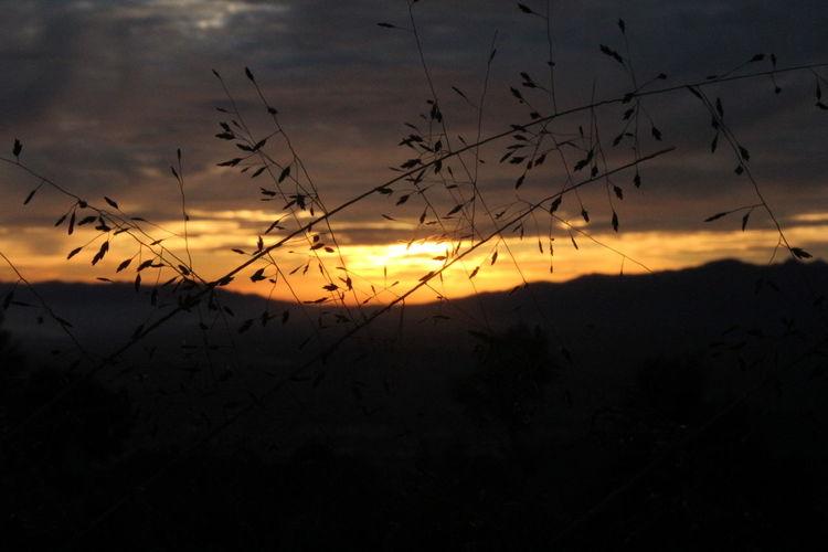 Sunrise Illuminated Silhouette Grass Beauty In Nature Landscape EyeEm Best Shots Hello World