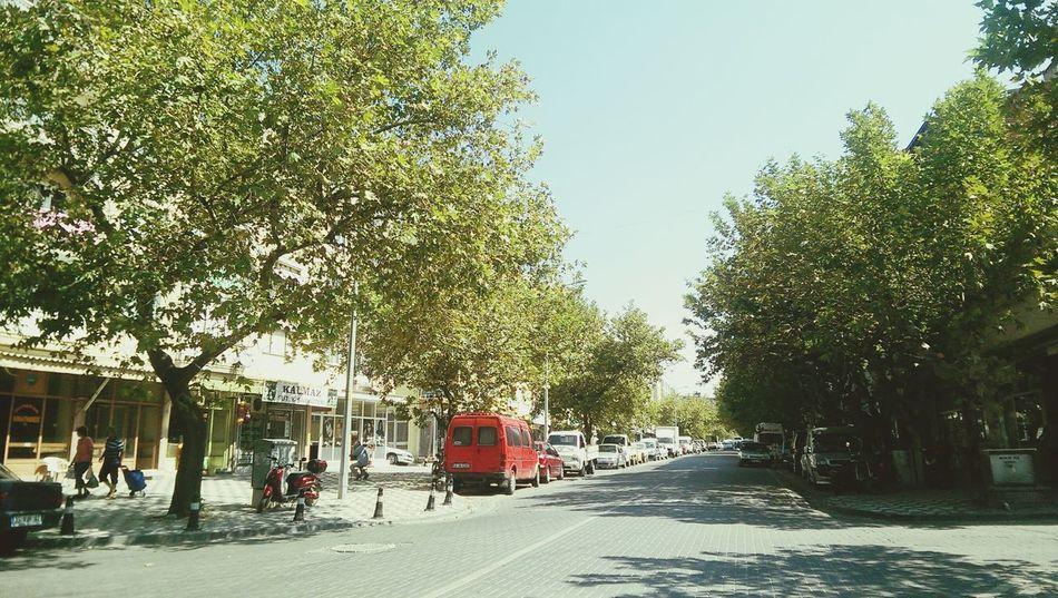 Tree Road Village Road