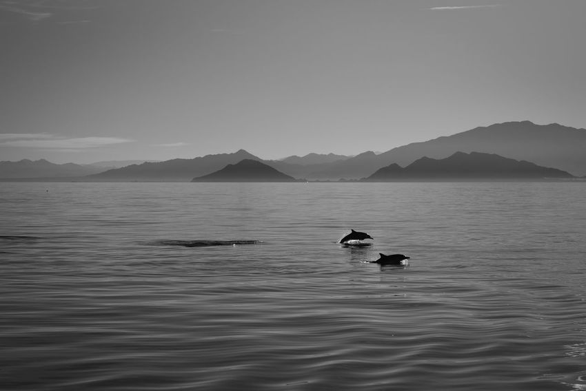 Be. Ready. Nature Animal Dolphin Landscape Marine Life Mountain Outdoors Sea Swimming Wildlife Black And White Friday