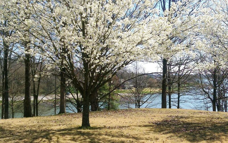 Spring's