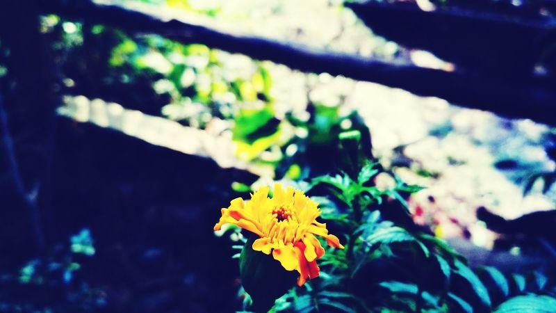 🌸 #flowers #flower #igscflowers #toptags @ #floral_splash #petals #garden_explorers #total_flowers #macroflowers_kingdom #mta_flowers #superb_flowers #blossom #sopretty #flowerzdelight #bestflowerspics #flowerstagram #flowersofinstagram #macro_brilliance #flowerslovers #macrophoto #kings_flora #floral #florals #tv_flowers #flowermagic #instablooms #bloom #awesome_florals #flowerpot #floweroftheday Flowers Flower Mta_flowers Total_flowers Floral_splash IGSCFLOWERS Plant Nature Fragility Freshness Day Close-up Flower Head Beauty In Nature Multi Colored Growth Outdoors Leaf No People