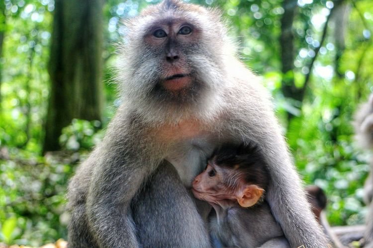 Love Animal Themes Monkey Female Animal Primate Animal Family Togetherness Nature Family Motherslove Monkeylove Love