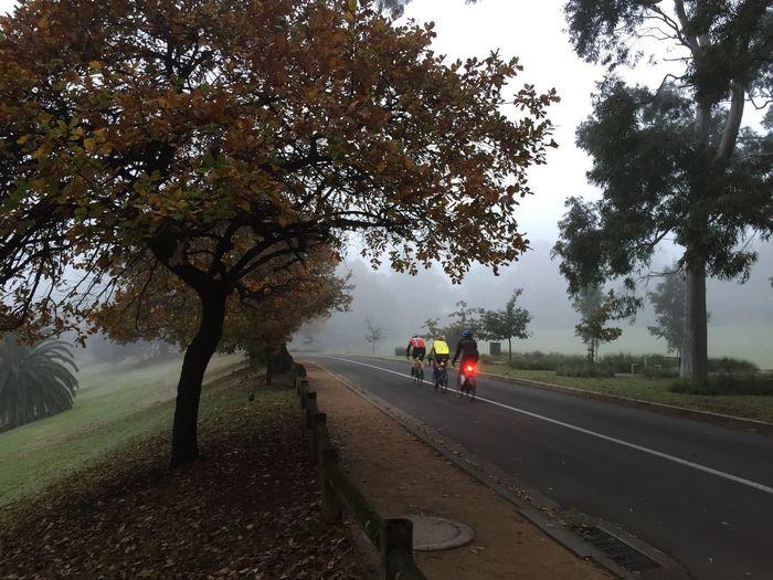 Trees on road against sky