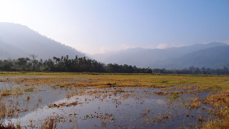 lake and blue sky Malaysia Truly Asia Agriculture Beauty In Nature Blue Sky Day Field Grass Growth Lake Landscape Malaysia Mountain Nature No People Outdoors Rice Paddy Scenics Sky Tranquil Scene Tranquility Tree Water