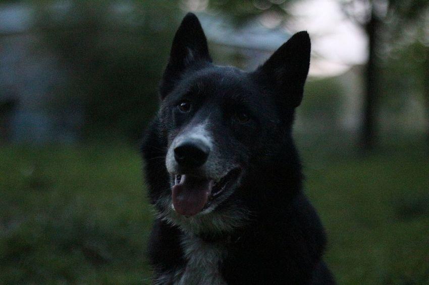 Dog Mydog Jerry Domestic Animals Pets