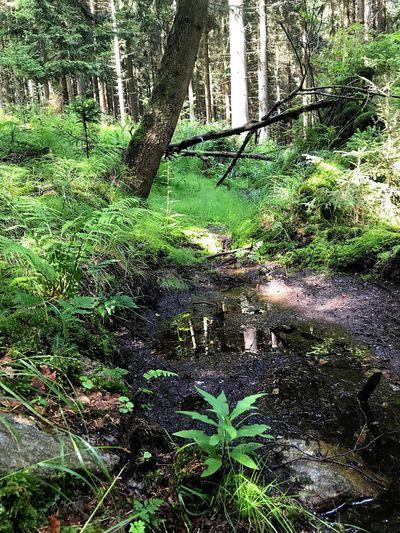 Urwald Erzgebirge