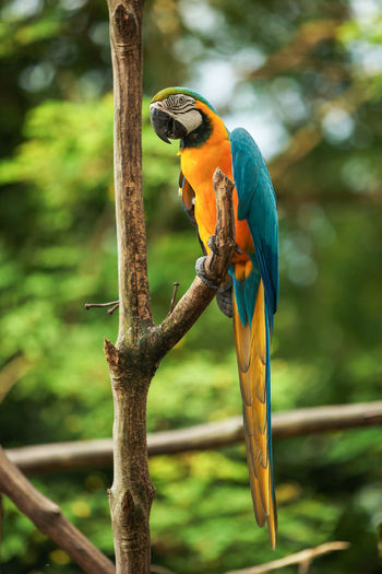 Close-up of parrot perching on tree