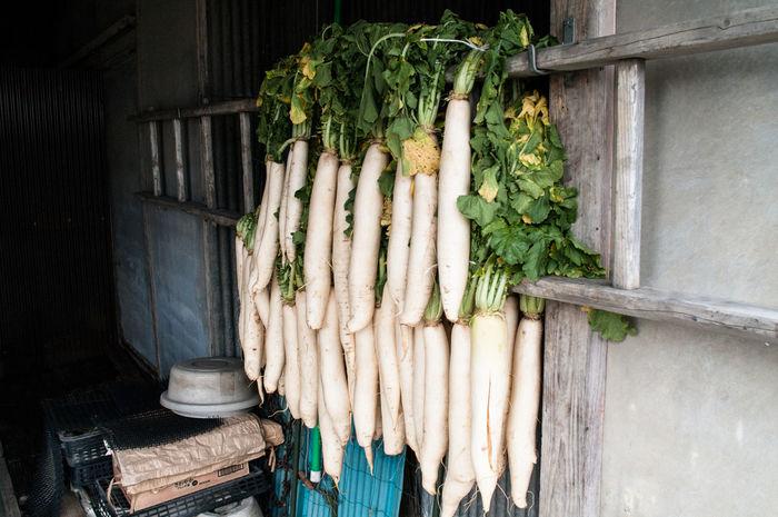 Food Freshness Indoors  Japan No People Radish Vegetable Food Freshness Indoors  Japan No People Radish Vegetable Root Vegetable Large Group Of Objects