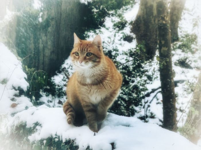 Snow Winter Cold Temperature Domestic Cat One Animal Mammal Pets White Color Animal Animal Themes Domestic Animals Feline Nature No People Snowing Day Sitting Outdoors Portrait Tree Somosfelices Beauty In Nature Capturemoment