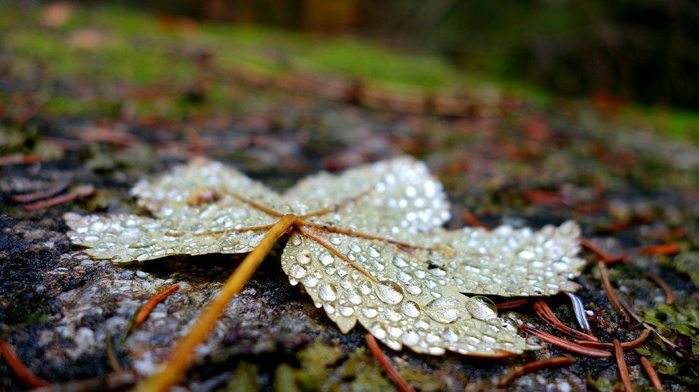 Blätter Wald Felsen Wasser Wassertropfen Moos Triberg Sony Qx100