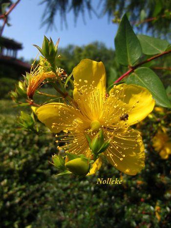 HAPPY EASTERN Streamzoofamily Flowerforfriends Floralperfection Noedit