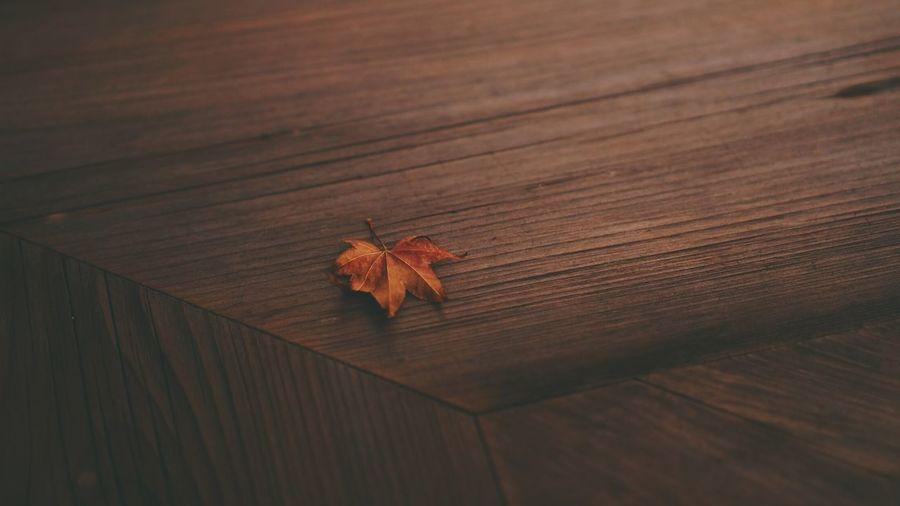 🍁🍁 Wood -