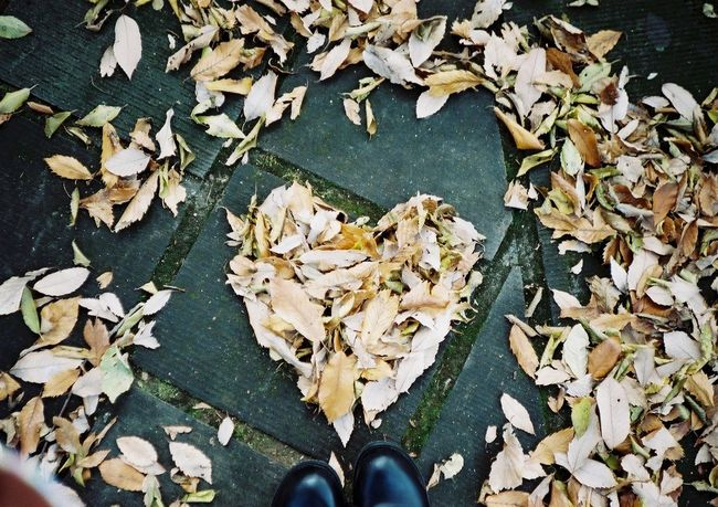 Autumn Day Film Fujifilm Human Body Part Human Leg Konicac35 Leaf Low Section Nature One Man Only One Person Outdoors People Personal Perspective Real People