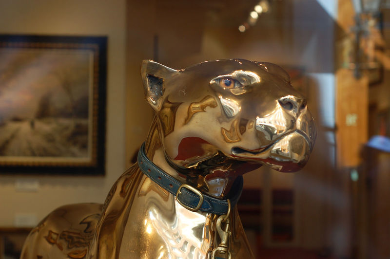 Animal Representation Arts Culture And Entertainment Day Gold Colored Illuminated Indoors  No People Panther Statue Streetphotography