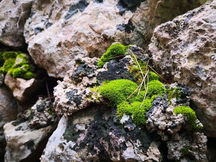 Muschio autunnale Salento Nature Porto Selvaggio Salento Porto Selvaggio Porto Selvaggio, Puglia Nardo Moss Rock - Object Textured  High Angle View Close-up