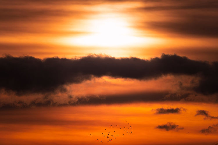 Silhouette birds against sky during sunset