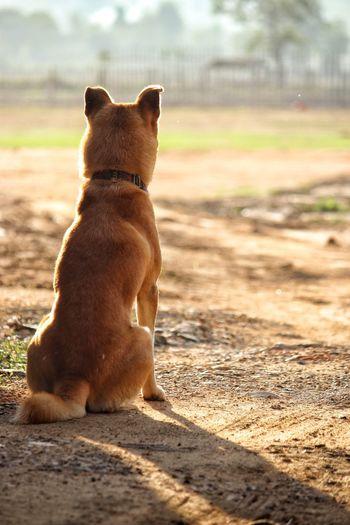 Dog sitting on a land
