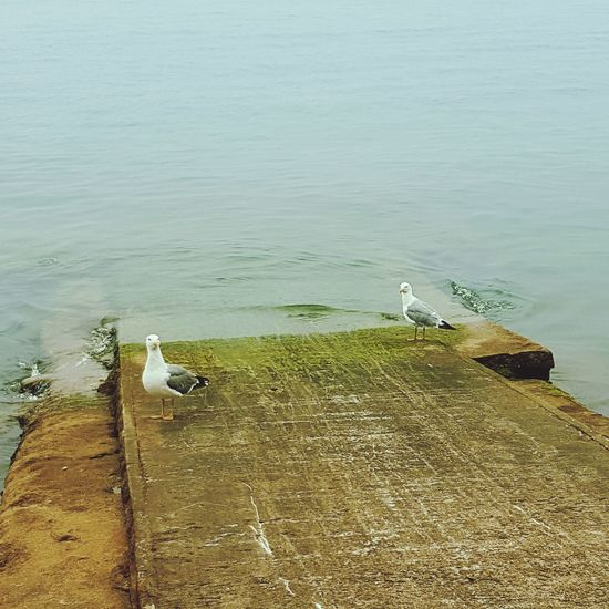 Seagulls And Sea Eyeemphotography Taking Photos