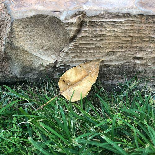 بعض الأشياء ليست مستحيله،لكنها لم تكتب لك 🍂 اخضر ورق طبيعه لقطه صوره تصويري  Today :) Picture Photos Growth Day No People Leaf Grass Beauty In Nature