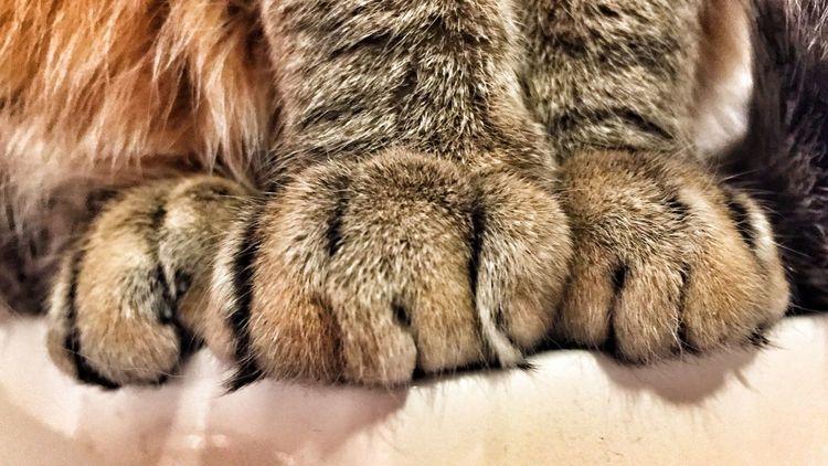 Cat TabbyCat Chicago Pets