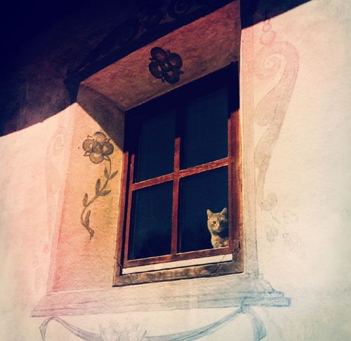 I Am New Here Cat♡ Window No People Katze Fenster Miezekatze EyeEmNewHere