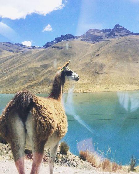 Peru Altitud Fotodesdeelcoche 😍